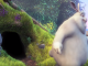 Big Buck Bunny, cortometraggio Creative Commons